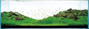 形山水族館 イメージ